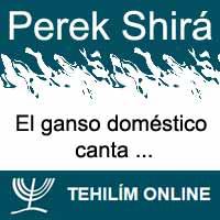 Perek Shirá : El ganso doméstico canta
